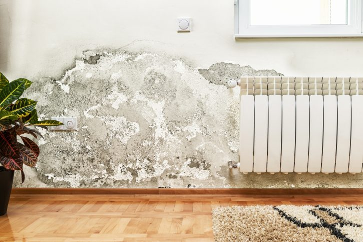 This image is of mould in a home
